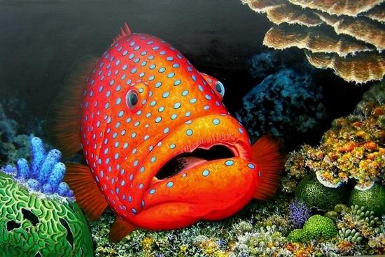 coral_grouper3.jpg
