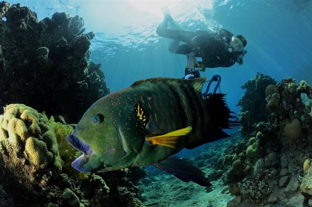 eilat-scuba-diving.jpg