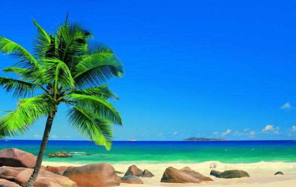 Где лучше отдыхать на Сейшельских островах