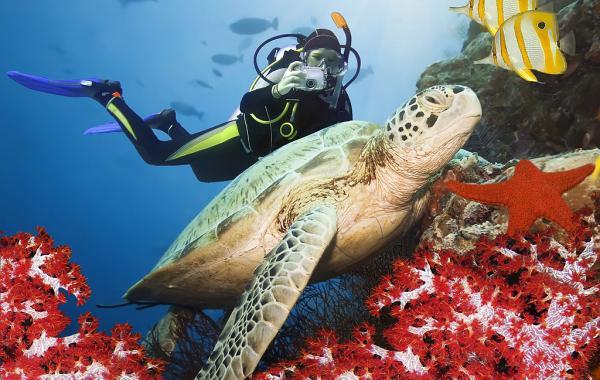 Дайвинг на Сейшельских острова