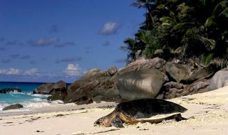 Погода на Сейшельских островах в феврале