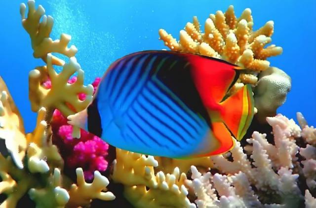pez-de-largo-morro-y-piel-azul-y-negra-800x527.jpg