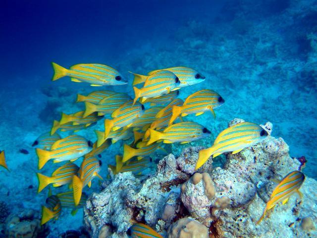 ryby-na-seyshelah.jpg