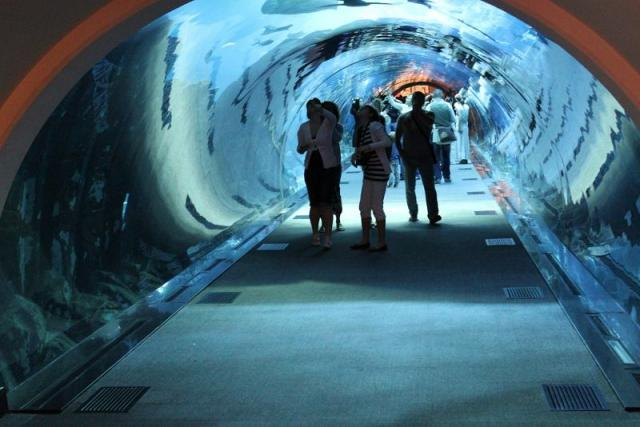 Лучший аквариум мира