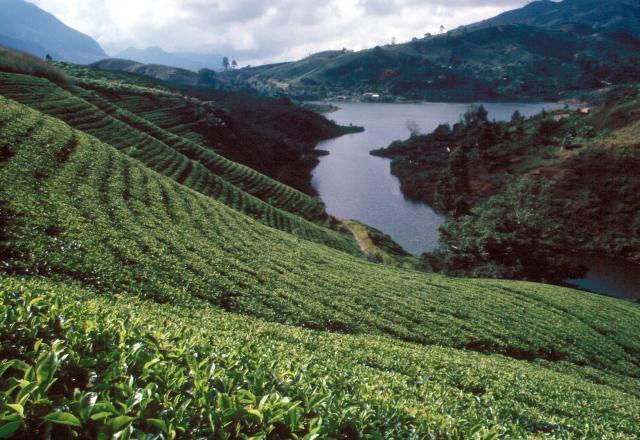Пейзаж Шри-Ланки