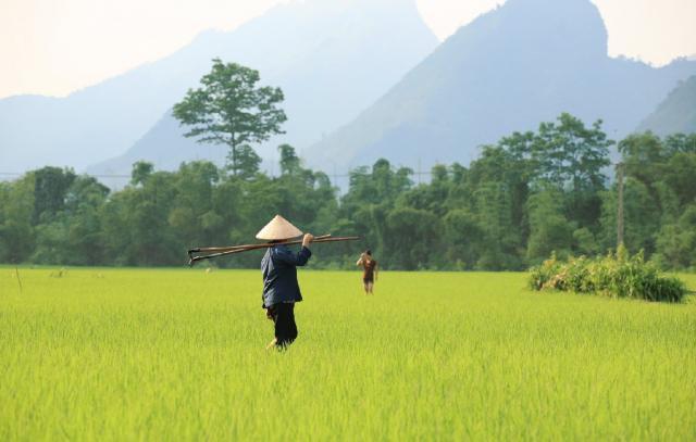 Типичный вьетнамский пейзаж