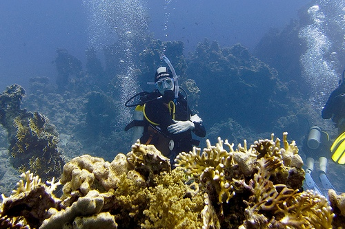 waiting-behind-some-corals.jpg